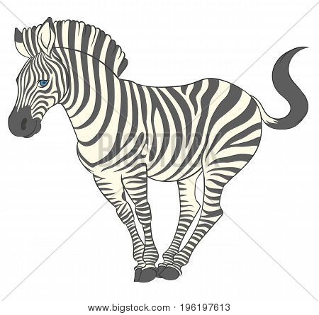 fun cute cartoon zebra in energetic pose - vector animal illustration