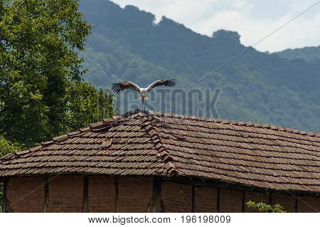 Stork alight  over old roof in summer weather,  Dushantsi village, Central Balkan mountain, Stara Planina, Bulgaria