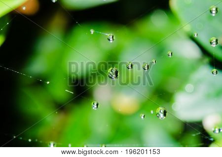 A beautiful macro shot of several morning raindrops caught on a web. Feeling of image is very peaceful thanks to green smooth background.