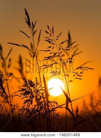Plant on the background of a golden sunset .