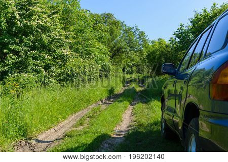 The blue car is parked on a forest road