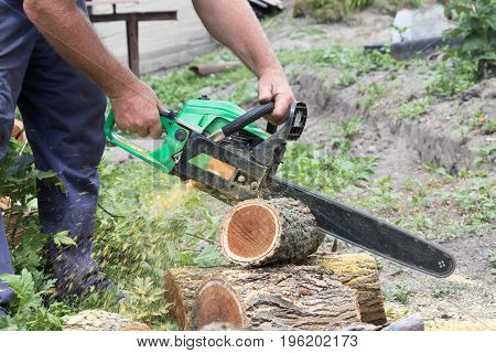 Harvesting firewood to the winter using a manual chain saw