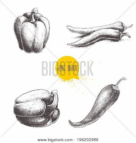 Hand drawn sketch collection of different types of pepper. Bell sweet pepper and red hot chili peppers. Vintage market fresh vegetables set isolated on white background. Spicy food.