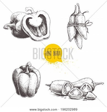 Hand drawn sketch collection of different types of pepper. Bell sweet peppers composition sliced hot chili peppers and jalapeno peppers bunch . Vintage market fresh vegetables set isolated on white background. Spicy food.