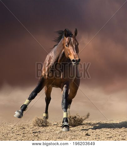 Bay horse jumps on dark clouds and dust background