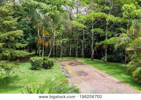 Tropical Driveway In Costa Rica