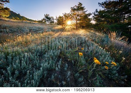 Real meadow field and flowers at summer, sunset.
