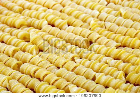 Italian uncooked wheat spiral torchietti pasta closeup sorted diagonally.