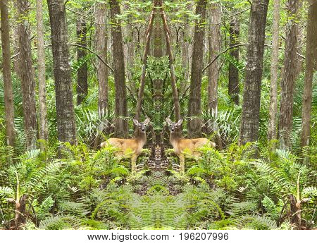 HDR photo of Mirrored Deer in the forest