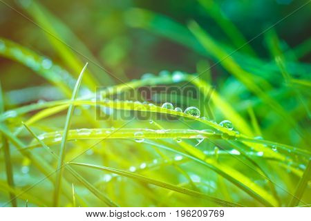 Green grass after rain with water drop and sun light flares.