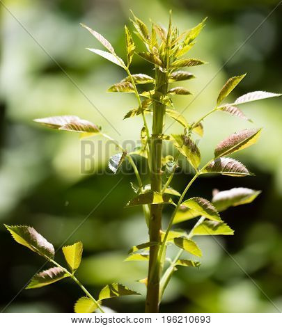 Branch of a plant with green leaves in the open air .