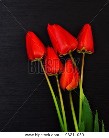 Five red blooming tulips on a black background