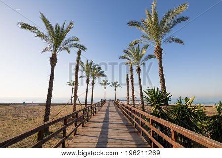 Wooden Footway And Palm Trees In Beach Of Benicassim
