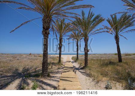 Wooden Walkway Towards Pine Beach In Grao
