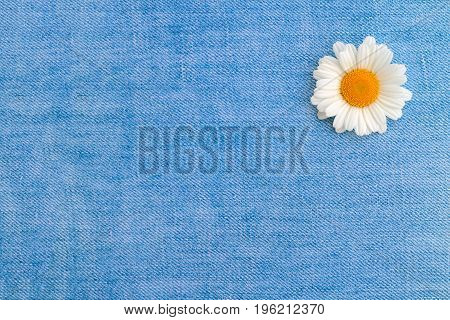 One chamomile on a background of light blue denim