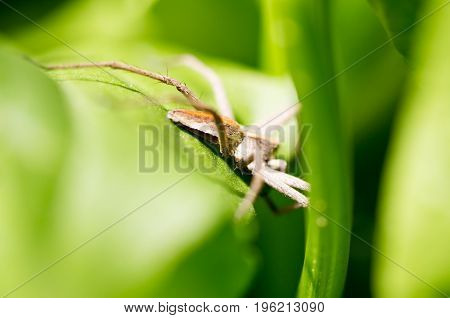 A spider on a green leaf in nature. macro