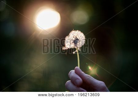 Person holding dandelion in hand blowing it away making a wish