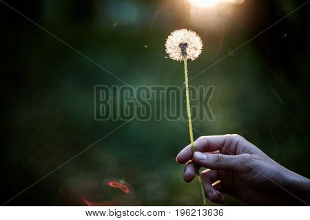 Person holding dandelion in hand making a wish