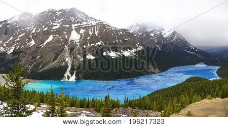 Panorama of Bright Blue Peyto Lake Thawing in the Spring