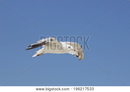 A seagull soaring in a blue summer sky