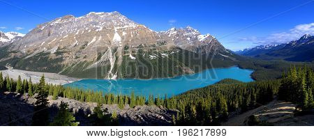 Bright Blue Peyto Lake on a Summers Morning