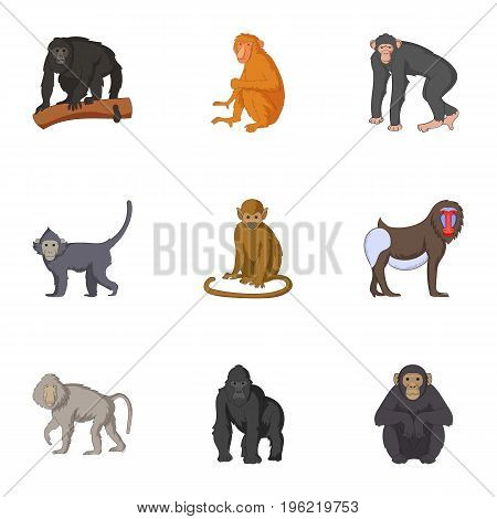 Adult individuals of monkeys icons set. Cartoon set of 9 adult individuals of monkeys vector icons for web isolated on white background