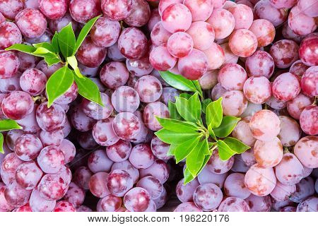 Background of red wine grapes on the market.