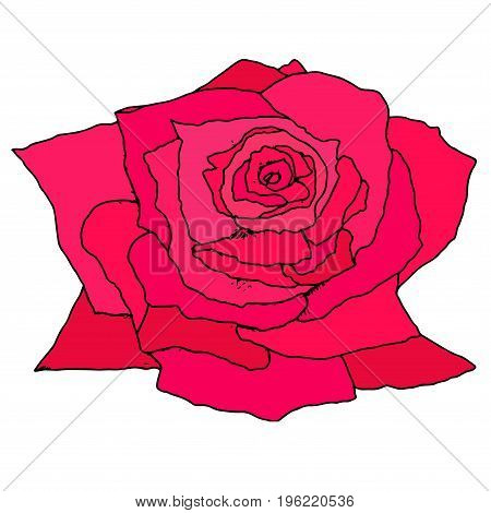 Bright crimson bud rose isolated on white background. Doodle Flower hand drawn. Vector illustration of design art book textiles print poster design fabric. Color page for adults and children.