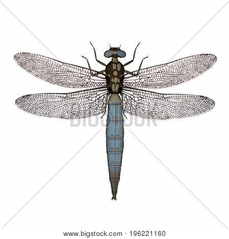 Dragonfly isolated in white background - 3D render