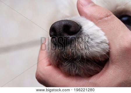 Violence over dog theme. Man holding dog mouth shut close-up
