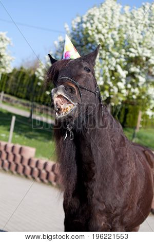 funny horse with party hat celebrate his birthday