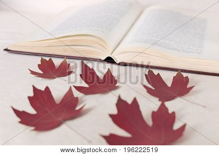 Red Maple Leaves Lie In Front Of An Open Book. The Concept Of Starting Education And Returning To Sc