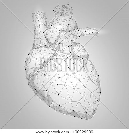 Human Heart Internal Organ Triangle Low Poly. Connected dots white gray neutral color technology 3d model medicine healthy body part vector illustration art