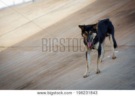 Black stray dogs live under concrete bridges.