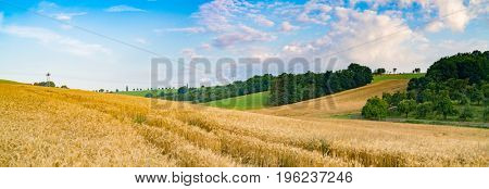 Panorama of wheat field in the morning in Kansas