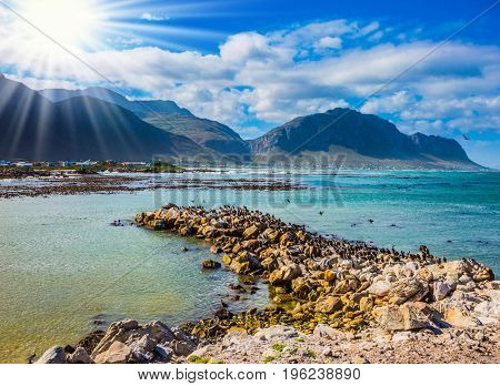 The bright sun illuminates the stony shore with algae. Surroundings of Cape Town. Boulders Penguin Colony National Park of the Atlantic, South Africa. The concept of  ecotourism