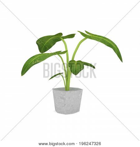 big leave houseplant in ceramic pot in 3D rendering