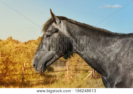Black horse on the background of autumn portrait