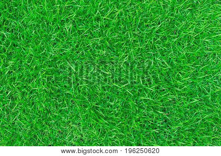 green lawn, backyard for background, Grass texture