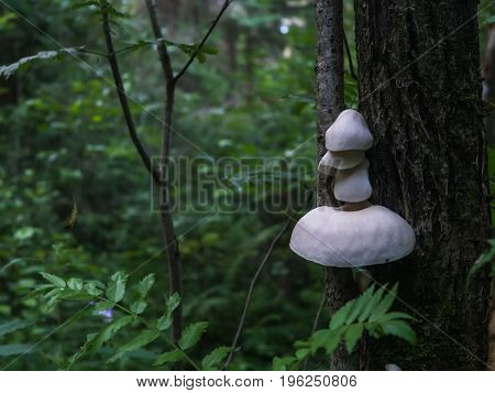 White forest inedible mushrooms on a tree