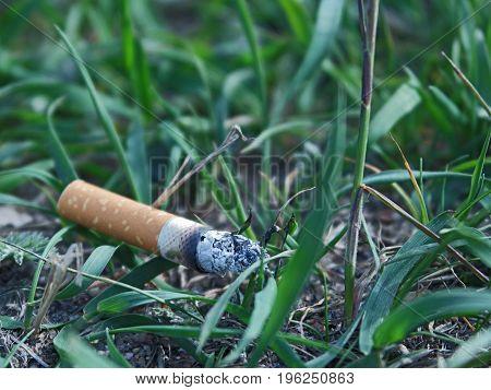 Trash smoking cigarette stub on green grass