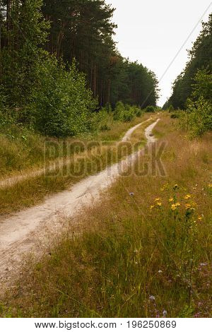 Dirt Road In The Forest. Russian Nature.