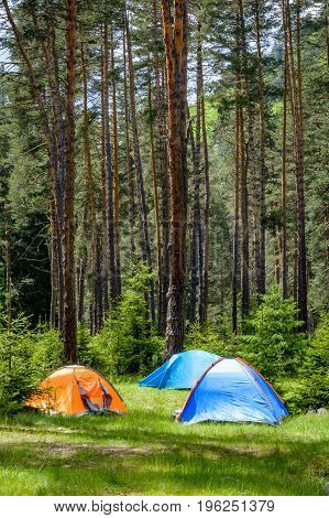 Tents In A Pine Forest