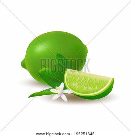 Isolated colored group of lime slice and whole juicy fruit with green leaves white flower and shadow on white background. Realistic citrus