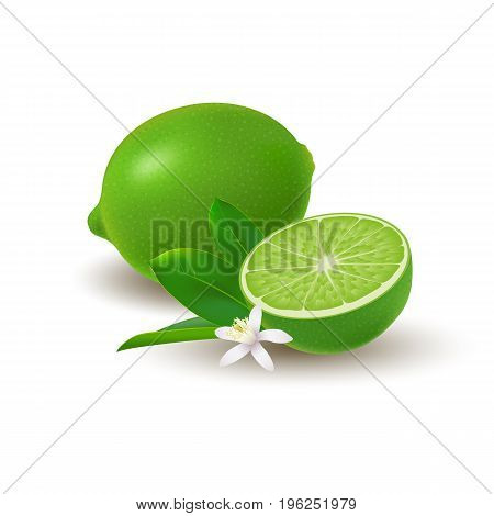 Isolated colored group of lime half and whole juicy fruit with green leaves white flower and shadow on white background. Realistic citrus
