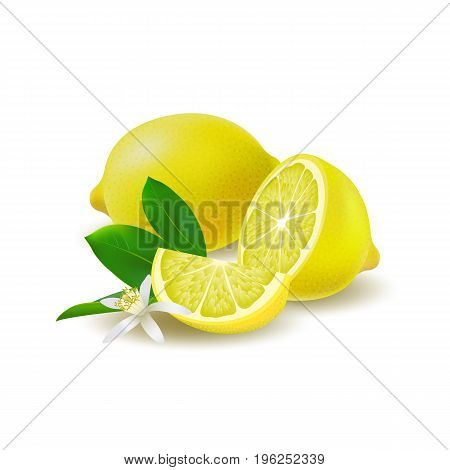 Isolated colored group of lemons half slice and whole juicy fruit with green leaves white flower and shadow on white background. Realistic citrus