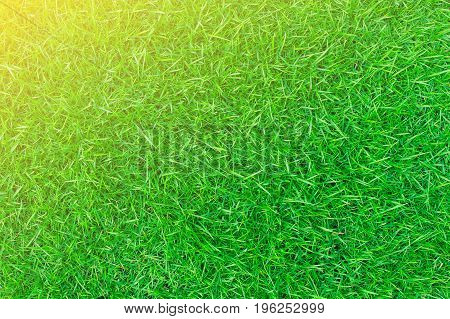 Sunlight shines on green lawns in the backyard. Lawn for the background