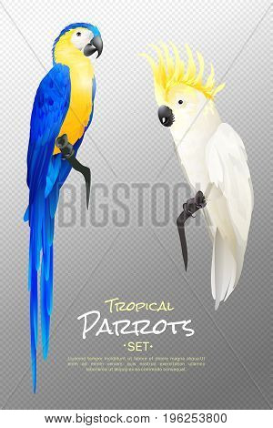 Set of realistic tropical parrots including yellow blue macaw and cockatoo on transparent background isolated vector illustration