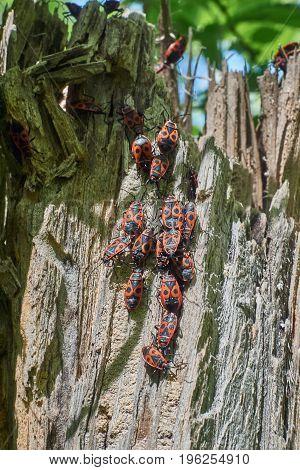 Mottled bugs basking in the spring sun.