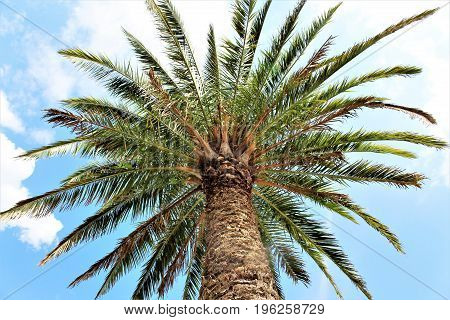 An image of a palm tree, trees